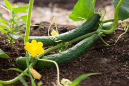Zaaien en planten in de juiste tijd